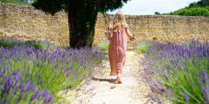 lavender_july